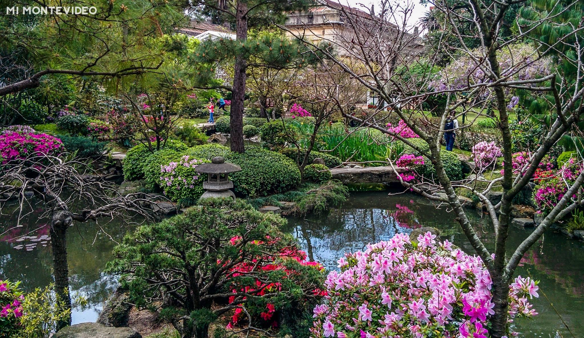 Jard n japon s de montevideo for Como criar caracoles de jardin